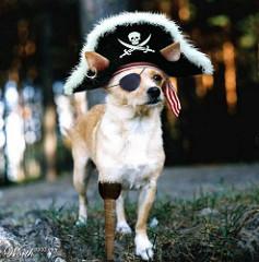 Captain Arrrf! Courtesy of Tony Wehrman at https://www.flickr.com/photos/tt2times/